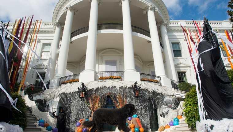 """""""Bo"""" llegó a la Casa Blanca en 2009 como un cachorro de seis meses y, enseguida, se convirtió en una fascinación para todo EE. UU. (Foto Prensa Libre: EFE)"""