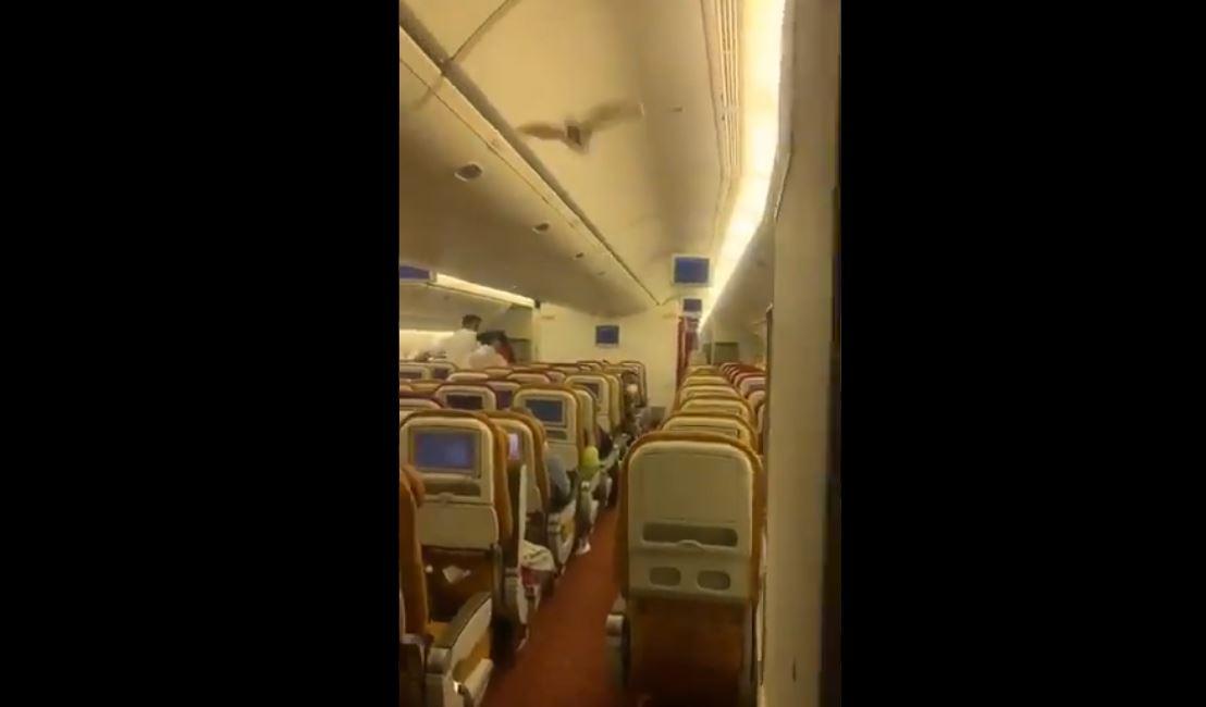 Video: Un murciélago obligó a un avión procedente de India a retornar de emergencia al aeropuerto
