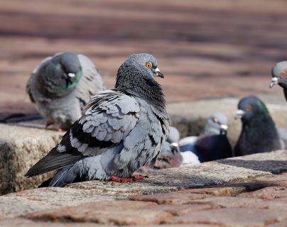 Muere quinceañera: bacteria provocada por palomas truncó la fiesta, el viaje al mar y los sueños de una joven