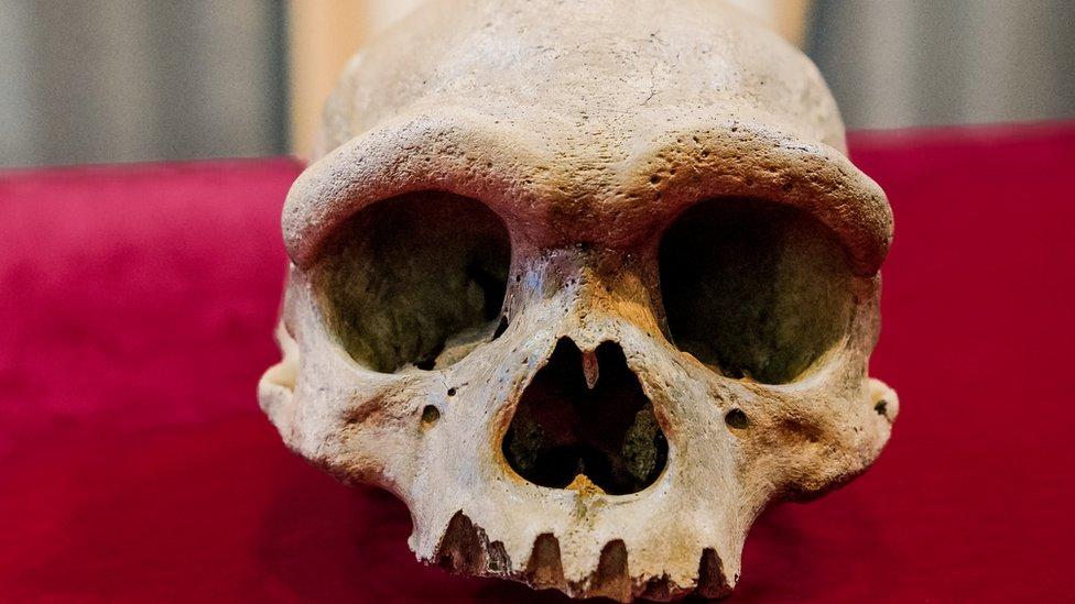 """""""Hombre dragón"""": el sorprendente hallazgo en China de una posible antigua especie humana hasta ahora desconocida"""