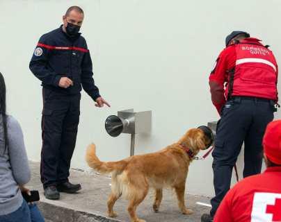 """""""El objetivo es que reconozcan al covid-19 en asintomáticos"""": perros afinan el olfato con sudor de enfermos en Ecuador"""
