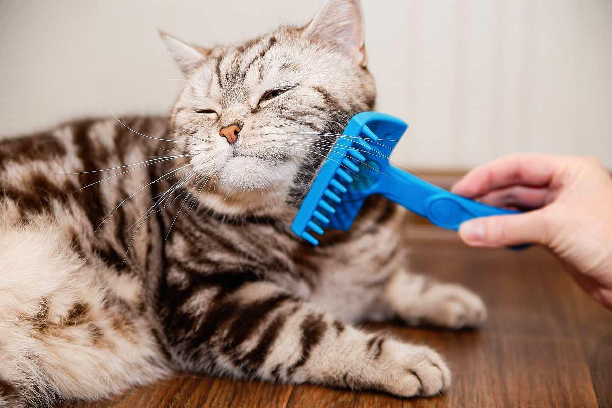 Consejos para una higiene adecuada de gatos