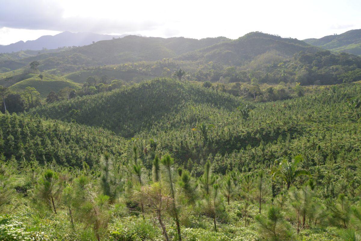 Así fue como Licores de Guatemala se convirtió en Carbono Neutral y ya no volverá a comprar créditos para mitigar su huella