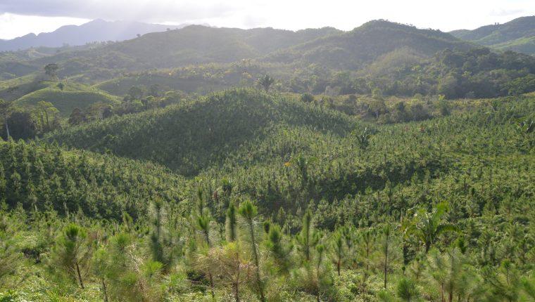 Un millón 850 mil árboles, plantados en diferentes puntos geográficos del país, permite a Licores de Guatemala mitigar de forma propia su huella de carbono. (Foto Prensa Libre: Cortesía)