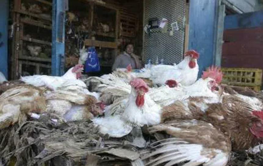 """H10N3: China detecta el primer caso mundial de esta gripe aviar en humanos y dice que fue transmisión """"accidental"""""""
