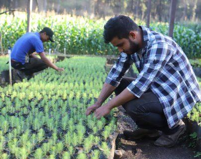 Proyecto guatemalteco de manejo forestal comunitario destaca en informe de la FAO