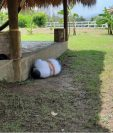 Cinco hombres fueron localizados sin vida en el interior de una finca en Teculután, Zacapa. (Foto Prensa Libre: Cortesía)