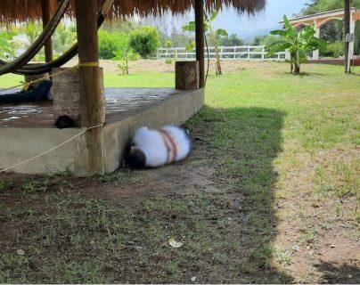 Masacre en una finca de Teculután, Zacapa, hallan cuerpos de cinco hombres