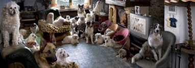 Los problemas de acumular mascotas