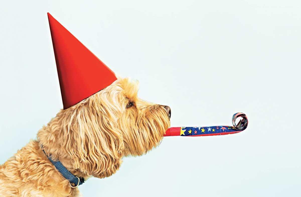Celebremos a los perros en su día