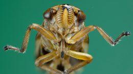 El increíble mundo de los insectos que son más fuertes que los humanos