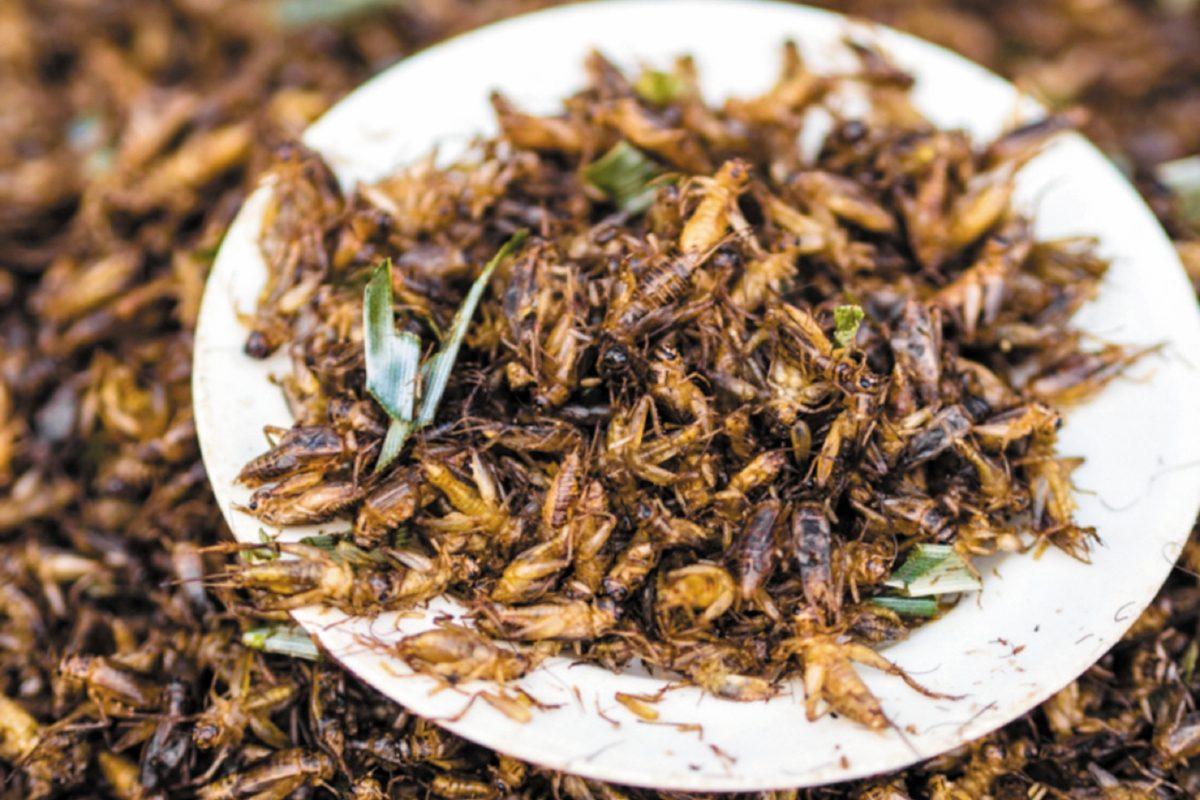 Científicos investigan la fabricación de harinas con insectos comestibles