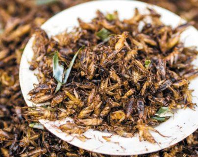 Los grillos y langostas tienen altas propiedades alimenticias, según los científicos. (Foto Prensa Libre: HemerotecaPL)