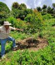 Guatemala tiene un potencial para cultivar aguacate y despachar el fruto fresco a otros mercados internacionales que están demandando. (Foto Prensa Libre: Cortesía Agropecuaria Popoyán)