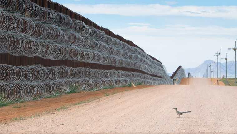 Alejandro Prieto ha documentado la vida salvaje y los ecosistemas de la frontera sur de Estados Unidos