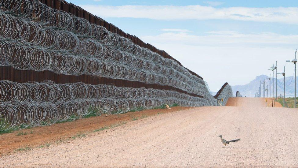 """La imagen de un """"correcaminos"""" en el muro fronterizo entre EE. UU. y México gana prestigioso concurso de fotografía"""