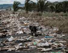 Un perro camina entre la basura que ahoga playa Guacalillo, el 16 de agosto de 2021, cerca de San José, Costa Rica.  EFE/ Jeffrey Arguedas