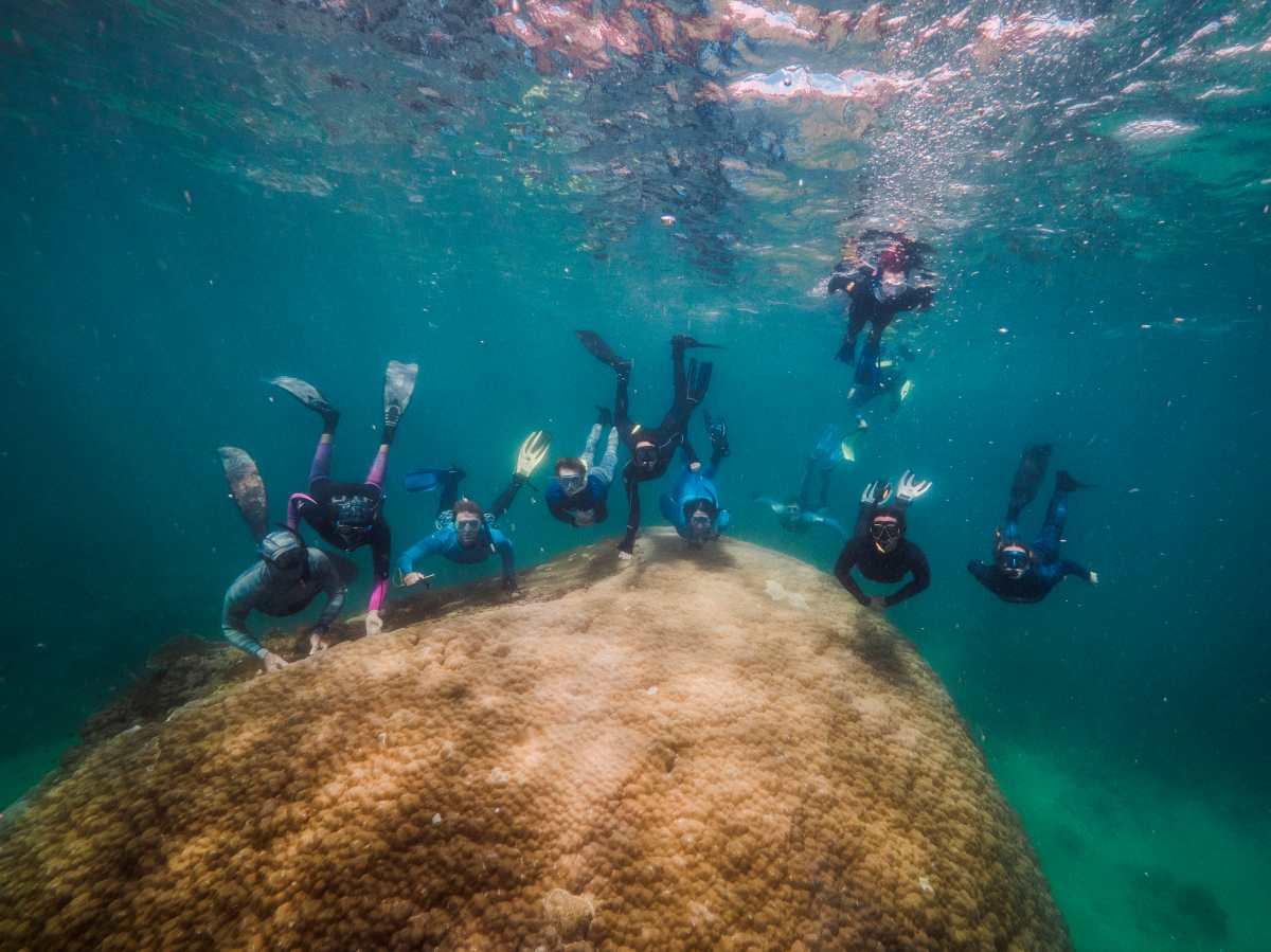 Submarinistas hallan un enorme coral de 400 años en Gran Barrera australiana