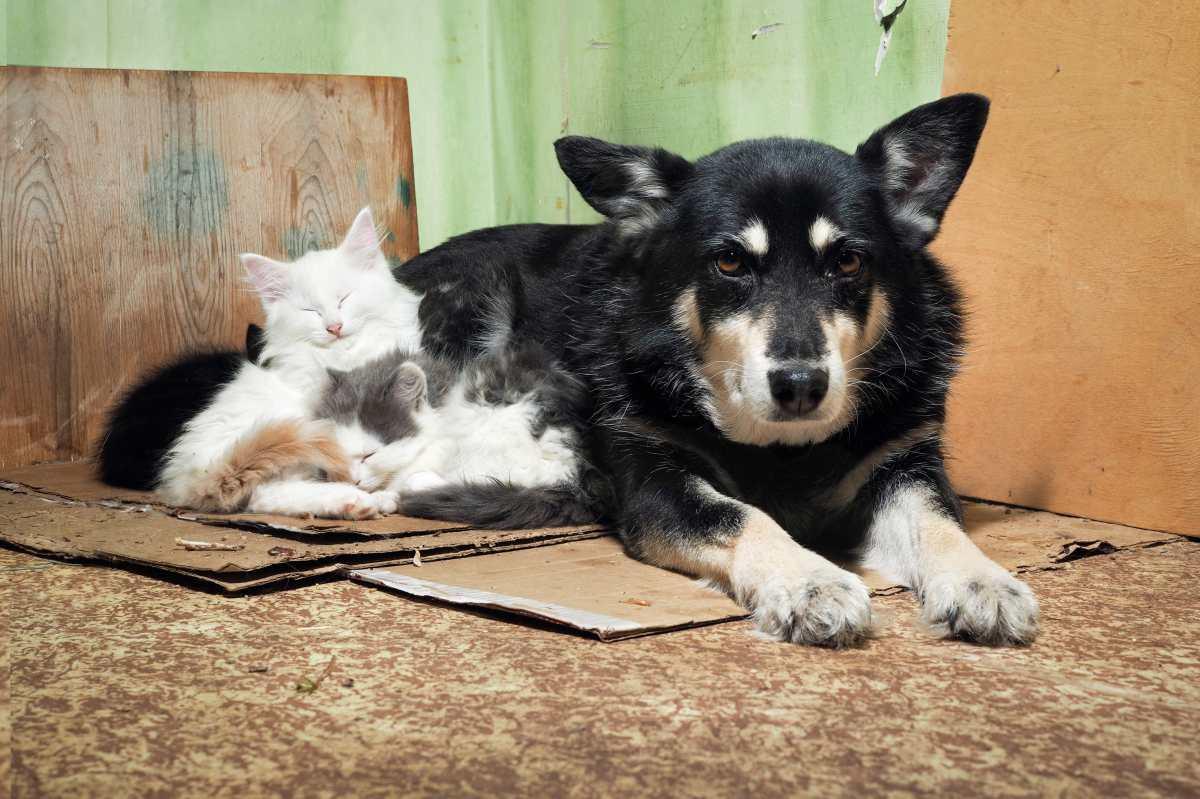 Cómo prevenir que perros y gatos se queden sin hogar