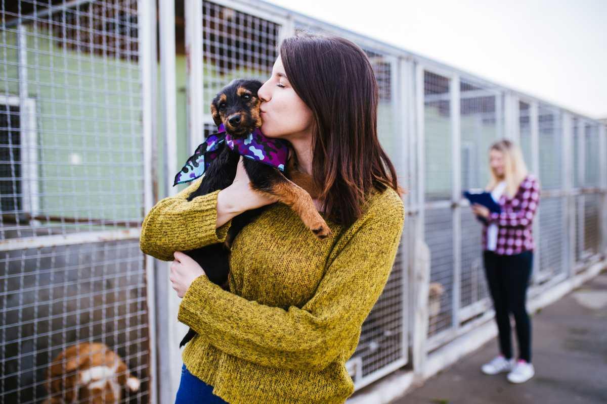 Siete preguntas que hay que hacerse antes de adoptar una mascota