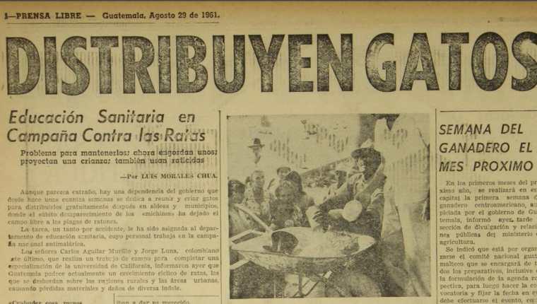 El Gobierno recaudó gatos para contrarrestar una plaga de ratas que incrementó en 1960. (Foto Prensa Libre: Hemeroteca PL).