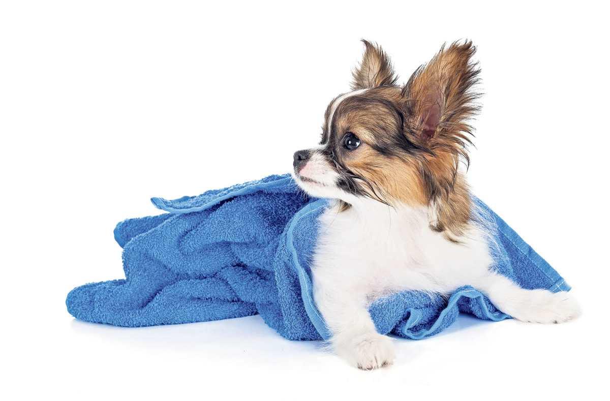 La importancia del agua para la sobrevivencia de las mascotas