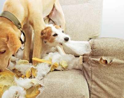 ¿Cómo evitar que los perros muerdan los muebles?