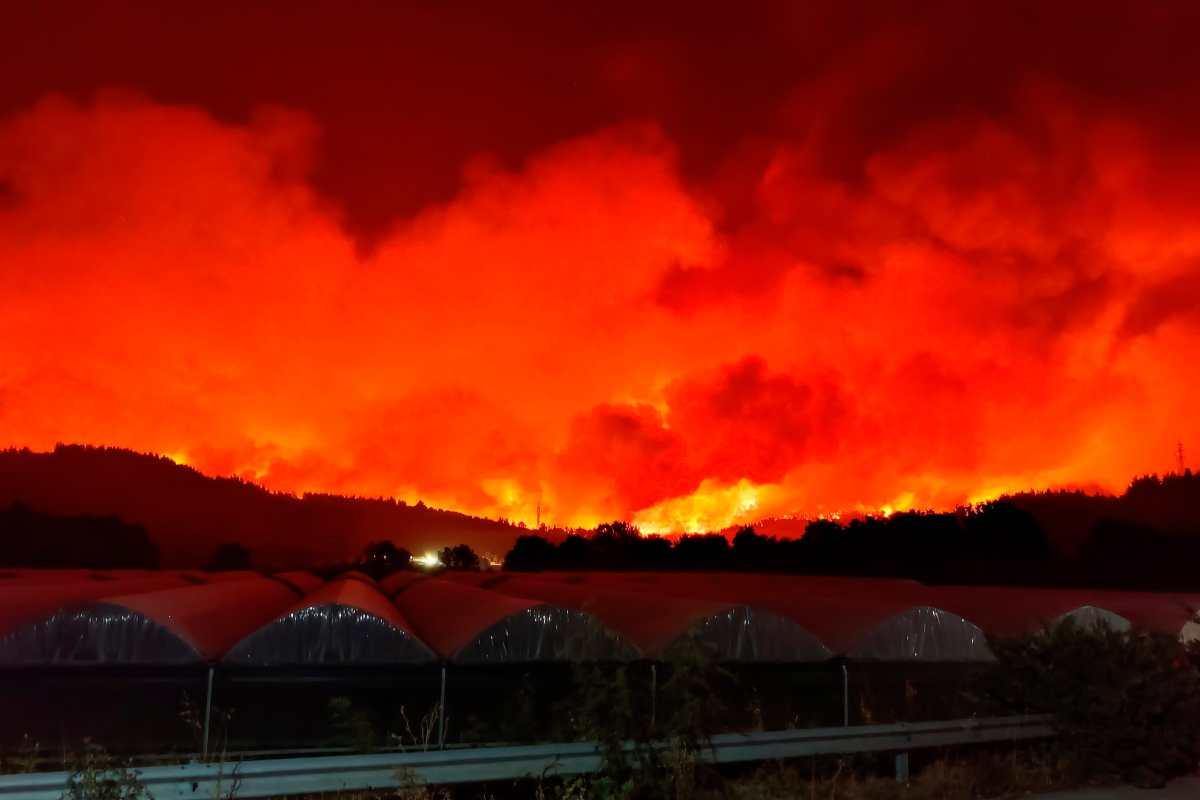 Las impactantes imágenes del fuego que devora Grecia (los incendios, las amenazas y las víctimas)