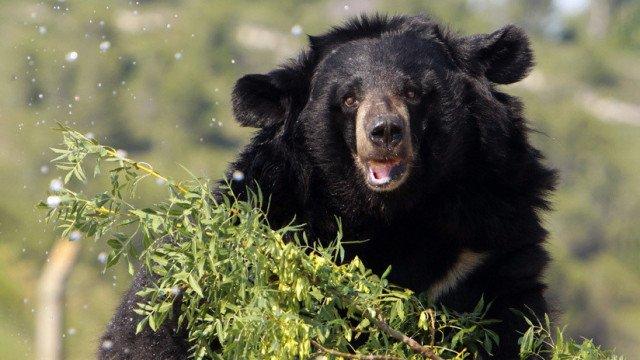 """""""Pensé que era peligroso"""": diputado multimillonario ruso mata a un hombre al confundirlo con un oso"""
