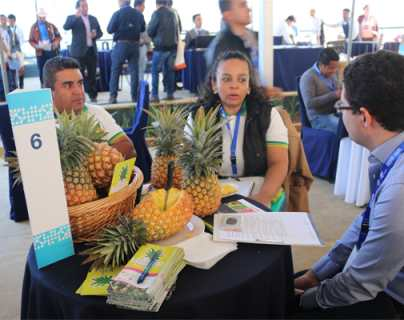 Agro encuentros de negocios promoverán oferta exportable de Guatemala