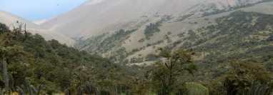 Algunas áreas, como las Lomas de Atiquipa, tienen árboles de baja estatura.