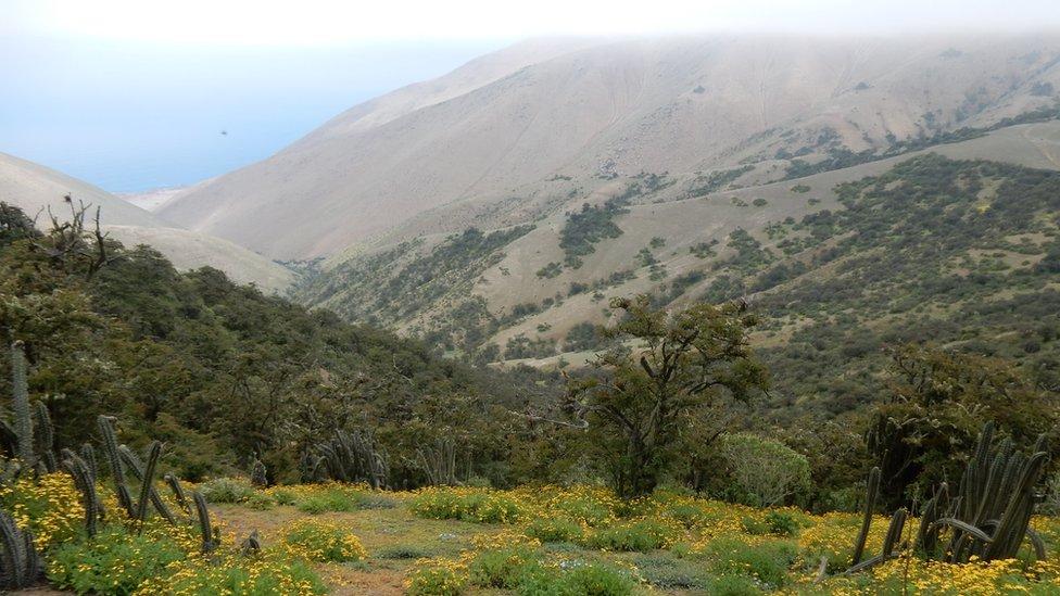 """Qué son los """"oasis de niebla"""" de los desiertos de Chile y Perú y cómo es su riqueza de plantas únicas en el mundo"""