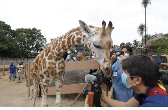 Espectadores observan con Jirafito en el Zoológico La Aurora. (Foto Prensa Libre: Esbin García)