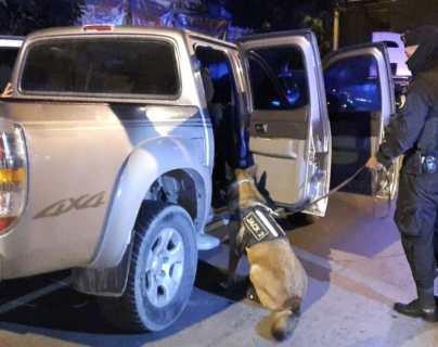 El K-9 Jack 2 inspecciona el picop en donde luego detectó 20 paquetes con cocaína. (Foto Prensa Libre: PNC)