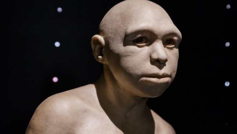Escultura que representa al antepasado Homo.
