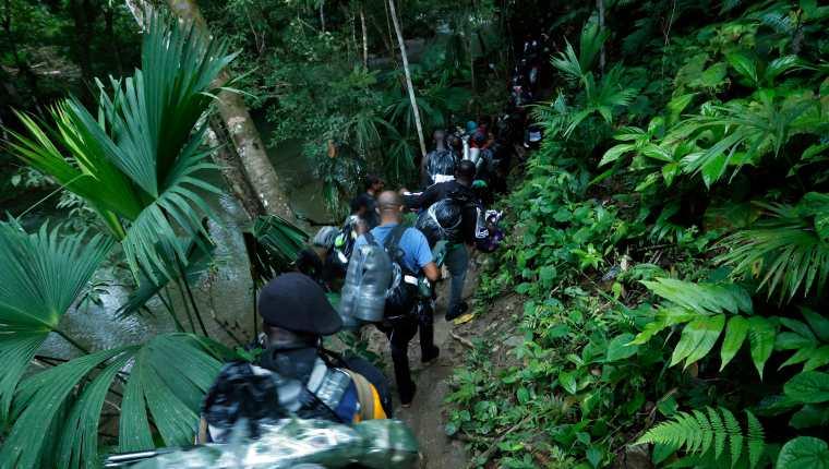 Un grupo de haitianos comienza a internarse en la selva del Darién, Panamá. Miles esperan en la frontera entre ese país y Colombia a que se les permita el paso. (Foto Prensa Libre: EFE)