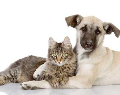 Seis consejos para que perros y gatos se lleven bien