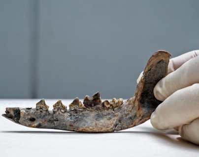 Xulo, el proyecto que busca demostrar que los perros fueron domesticados y habitaron Centroamérica desde hace 12 mil años
