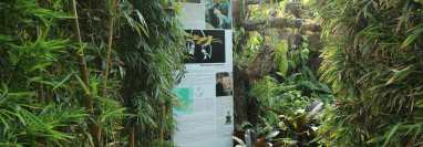 Parque Orquidario de Estepona dedica un espacio a una orquídea descubierta en Guatemala y a la que han nombrado como Estepona.  (Foto Prensa Libre: dpa)