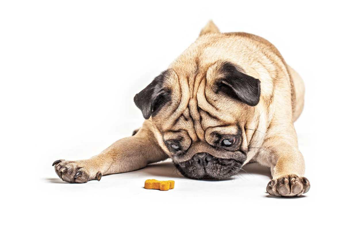 Importancia de la alimentación adecuada para tu mascota